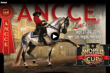 Live Andalusian World Cup 2016 Las Vegas
